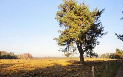 De Gorsselse Heide op 500 mtr afstand