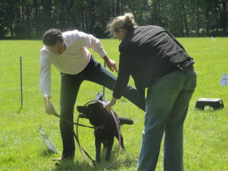 BuitenBusiness+activiteiten+Spiegelen+met+honden